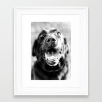 labrador Framed Art Prints featuring Labrador by Steph Lauren