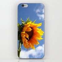 sunflower iPhone & iPod Skins featuring sunflower by Hannah
