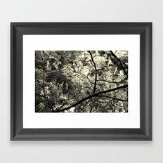Monochrome Leaf's  Framed Art Print