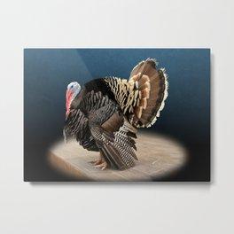 Spotlight on a Male Turkey Metal Print