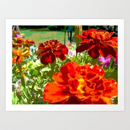 Burning Marigolds in the Sun Art Print