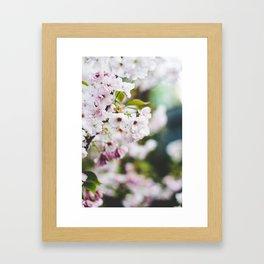Springtime Blossom Framed Art Print