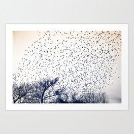 starling murmuration japan Art Print