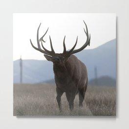 Watercolor Elk Bull 48, Estes Park, Colorado, Rage Metal Print