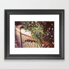 Juniper Tree Framed Art Print