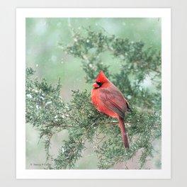 Christmas Bird: Northern Cardinal Art Print