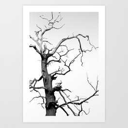 Gothic Minimalist Tree Photograph Art Print