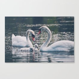 The Swans Canvas Print