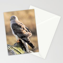 Sunlit Profile of a Northern Harrier Hawk on Driftwood Stationery Cards