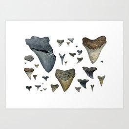 Fossil shark teeth watercolor Art Print