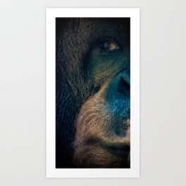 The Shy Orangutan Art Print
