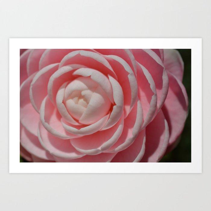 In Pink! Art Print