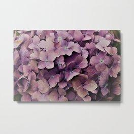 Purple Orchid flower Metal Print