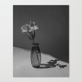 Shadow and flower Canvas Print
