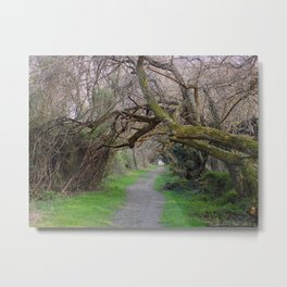 Tree tunnel at Wye Island | Eastern Shore, Maryland Metal Print
