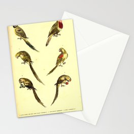Little Green And Red Long Tailed Parroquet Long Tailed Parroquet Lory Parroquet Red And Blue Headed Parroquet Rose Headed Ring Parroquet Yellow Faced Parroquet14 Stationery Cards