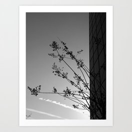 Nature and The City Art Print