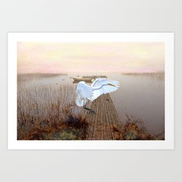Great White Heron Landing Art Print