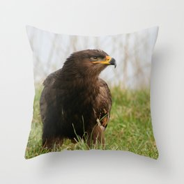 Young Common Buzzard Throw Pillow