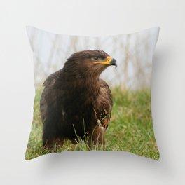 Young Common Buzzard Throw Pillow