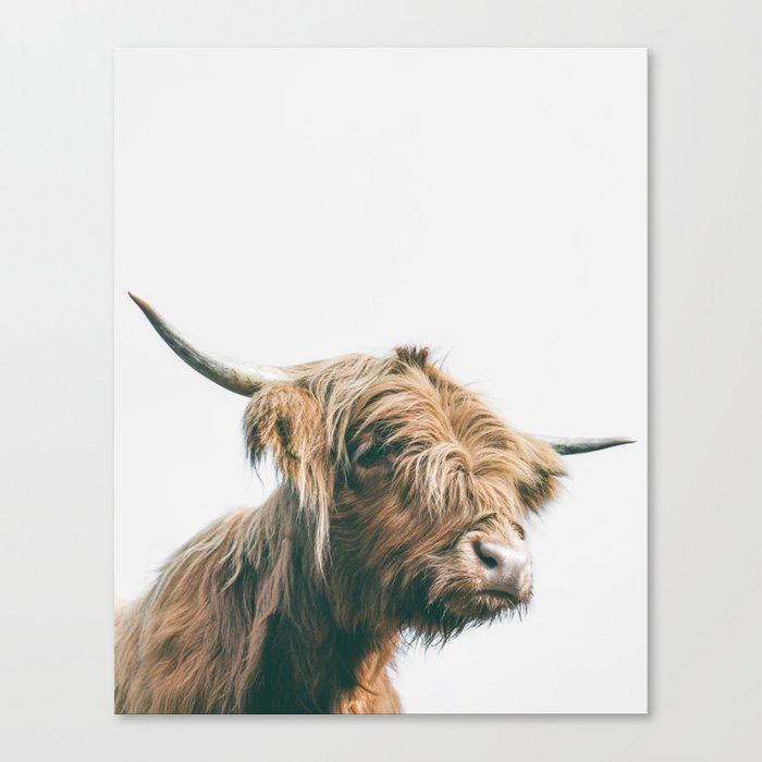 Majestic Highland cow portrait Canvas Print
