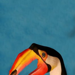 Art Print - Parrot - 4you