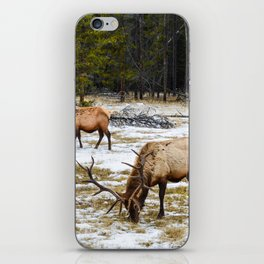 Jasper Locals- Male Elk/Wapiti iPhone Skin