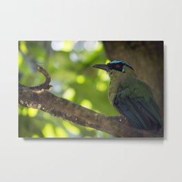 Resting in a Tree - Bird Photography Metal Print