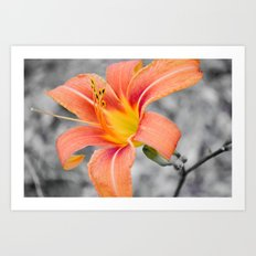 flower in grey Art Print