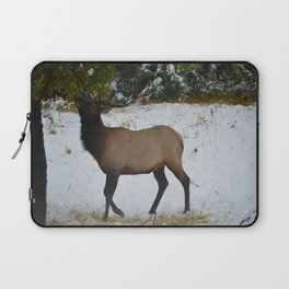 Elk reaches up for the green leaves in an early September snowfall, Jasper National Park Laptop Sleeve