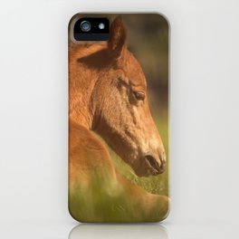 Cute Foal Laying Down iPhone Case