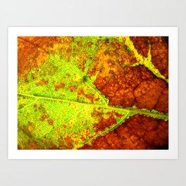 Macro Leaf no 5 Art Print