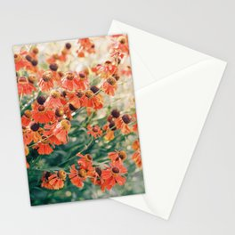 Echinacea flower field Stationery Cards