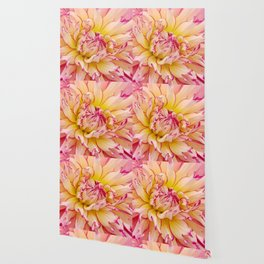Pink Dahlia with Bright Pink tips Close Up Detail Wallpaper