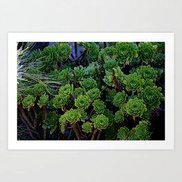 Succulent valley Art Print