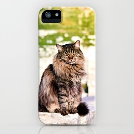 Are cats just gods in disguise? iPhone Case