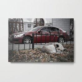 dream city dog Metal Print