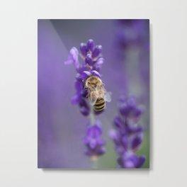 Lavender Bee Metal Print