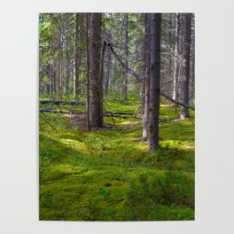The Forest Floor in Jasper National Park, Canada Poster