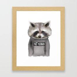 Raccoon Not human Framed Art Print