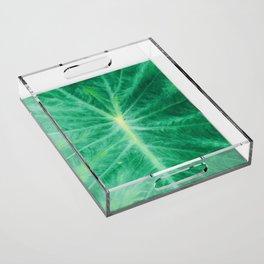 Colocasia Esculenta Acrylic Tray