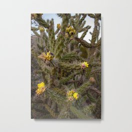 Cane cholla cactus (walking stick cholla) with yellow blossoms Metal Print
