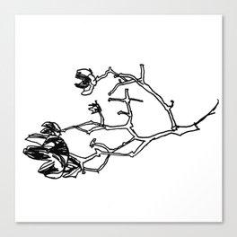 Crepe Myrtle II Canvas Print
