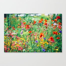 The Wild Flowers (Color) Canvas Print