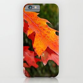 leaves in Autumn iPhone Case