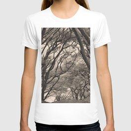 Acacia Grove T-shirt