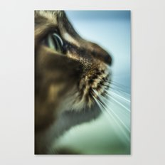 Maine Coon Close Up Canvas Print