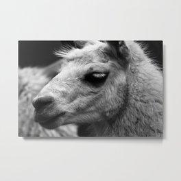 #animal #cute Metal Print