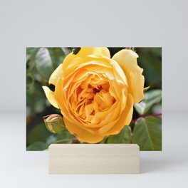 Warm Yellow Rose by Reay of Light Photography Mini Art Print