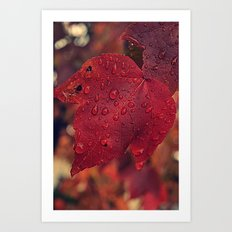 Fall Drops II  Art Print